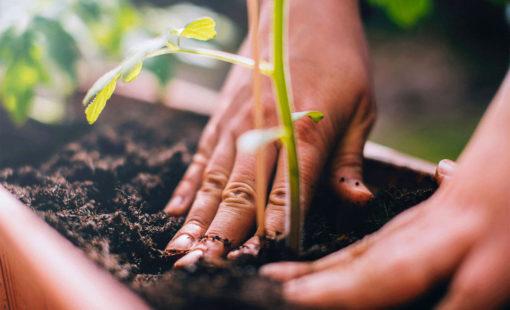 compostaje-sustentabilidad